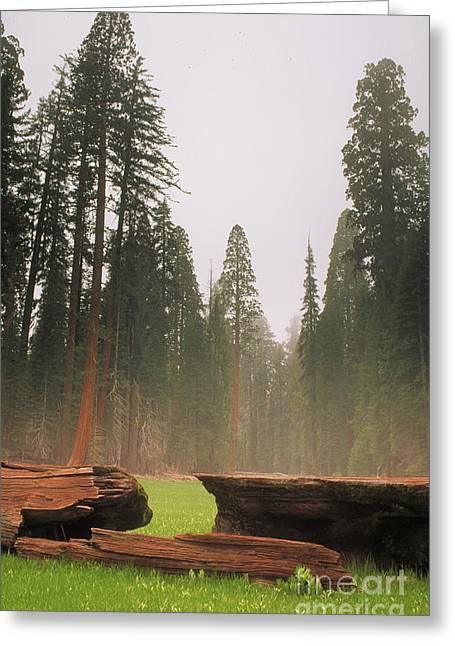 Protected Species Greeting Cards - Sequoia National Park Greeting Card by George Ranalli