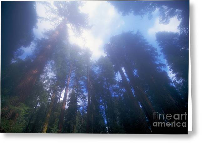 Protected Species Greeting Cards - Sequoia National Park Greeting Card by Mark Newman