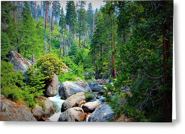 Power Plants Greeting Cards - Sequoia Stream Greeting Card by Heidi Smith