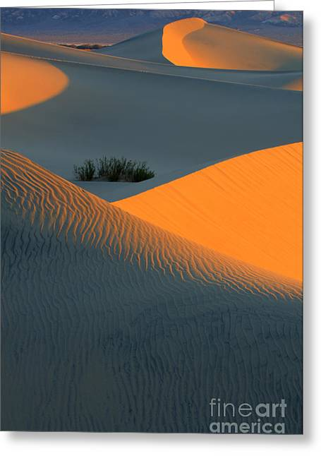 Sand Dunes National Park Greeting Cards - Death Valley Serenade In Light Greeting Card by Bob Christopher