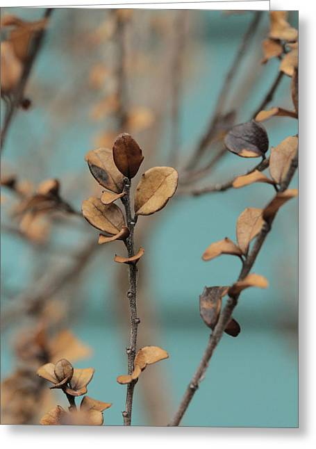 Light Taupe Greeting Cards - Serendipity .. Ascent Greeting Card by Connie Handscomb