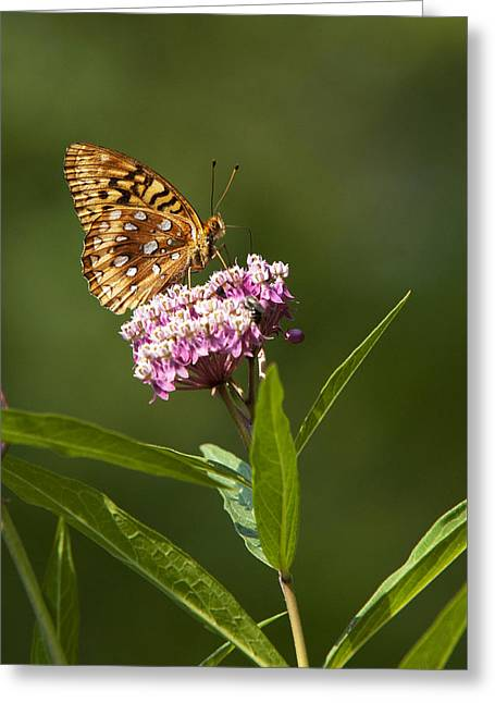 Serendipity Butterfly Greeting Card by Christina Rollo