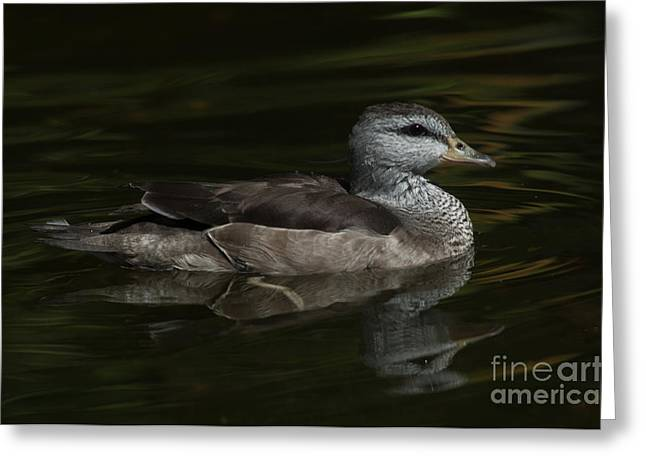 Photos Of Birds Greeting Cards - Serene Greeting Card by Adrian Tavano