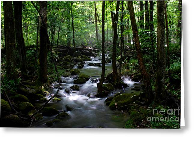Tennessee River Digital Greeting Cards - Serene Greenbrier Area Stream  Greeting Card by Nancy Mueller