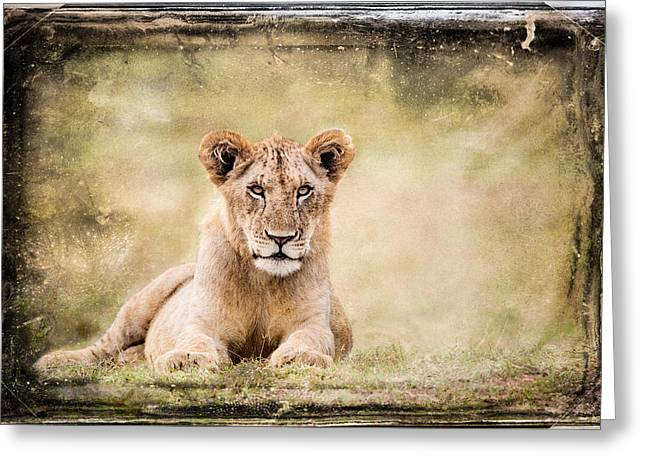 Satisfaction Greeting Cards - Serene Lioness Greeting Card by Mike Gaudaur