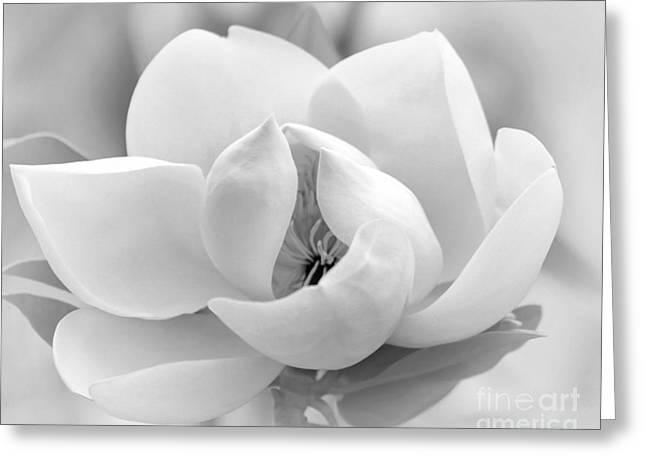 Florida Flowers Greeting Cards - Serene Magnolia Greeting Card by Sabrina L Ryan