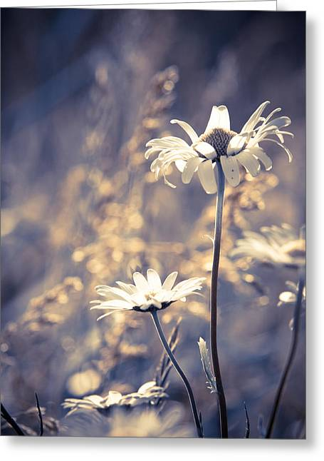 Bellis Greeting Cards - Serene Greeting Card by Matt Dobson