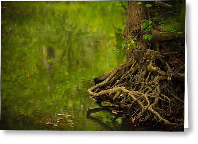 Serene Stream Greeting Card by Shane Holsclaw