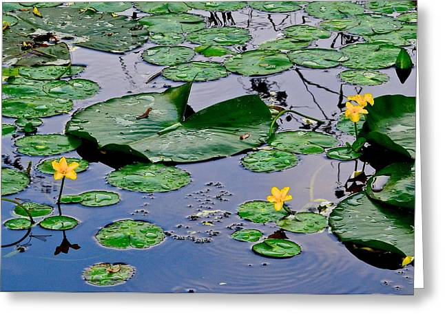 Water Lilly Greeting Cards - Serene to the Extreme Greeting Card by Frozen in Time Fine Art Photography