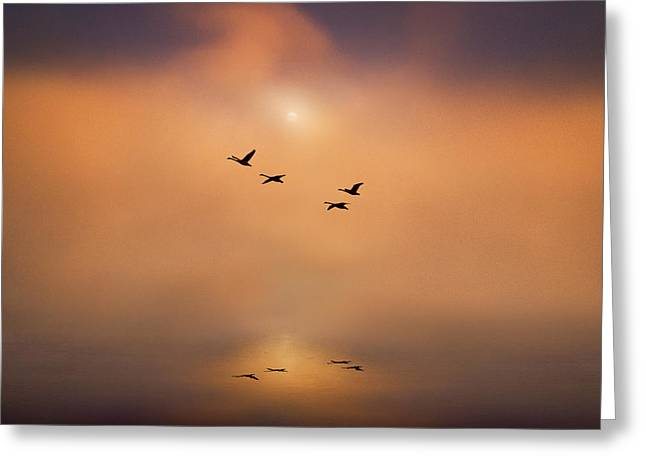 Muted Mauve Greeting Cards - Serene Tranquility Greeting Card by Adrian Campfield