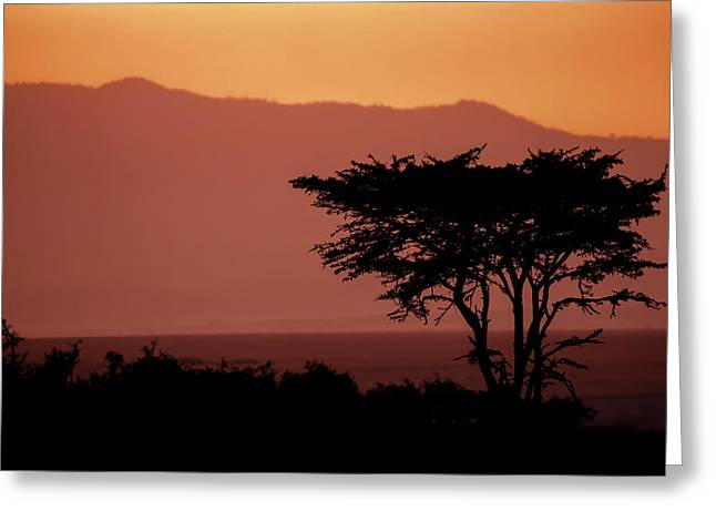 Silhouette Greeting Cards - Serengeti Sunset Greeting Card by Sebastian Musial