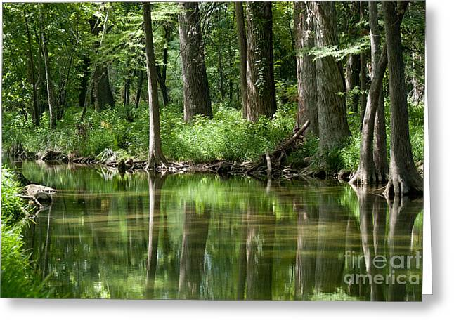 Barbara Shallue Photographs Greeting Cards - Serenity Greeting Card by Barbara Shallue