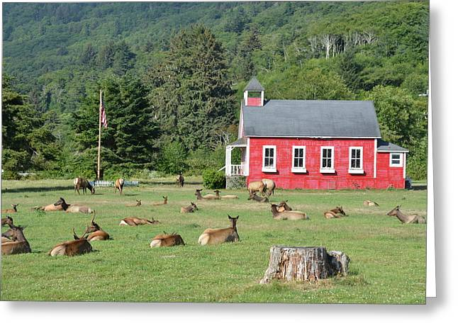Red School House Greeting Cards - Serenity Greeting Card by Dennis Blum