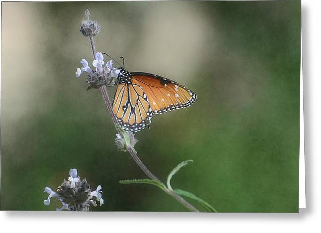 Butterfly On Flower Greeting Cards - Serenity Greeting Card by Fraida Gutovich