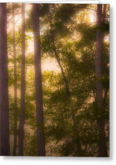 Haze Greeting Cards - Serenity in the Forest Greeting Card by Parker Cunningham