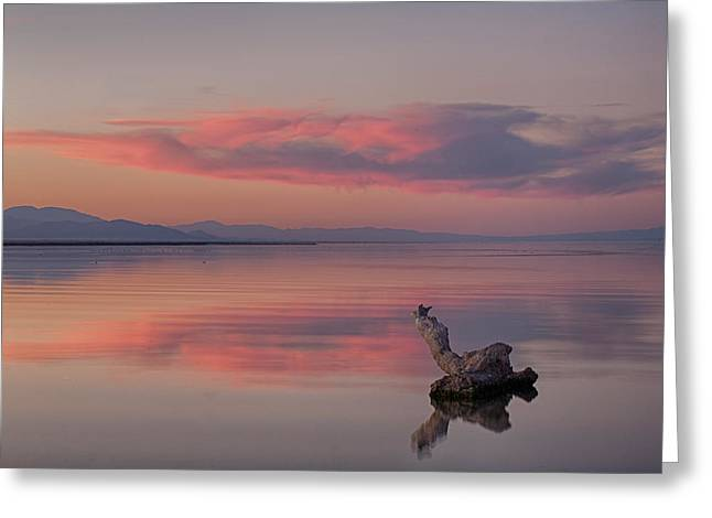 Salton Sea Greeting Cards - Serenity Now Greeting Card by Peter Tellone