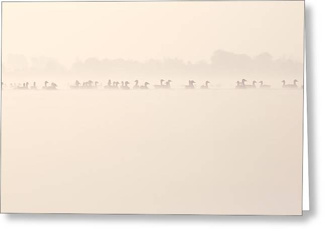 Fog Mist Greeting Cards - Serenity  Greeting Card by Roeselien Raimond