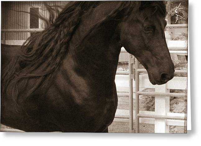Serenity  Greeting Card by Royal Grove Fine Art