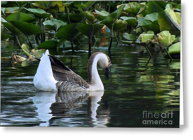 Uplifting Greeting Cards - Serenity Swim Greeting Card by Robyn King