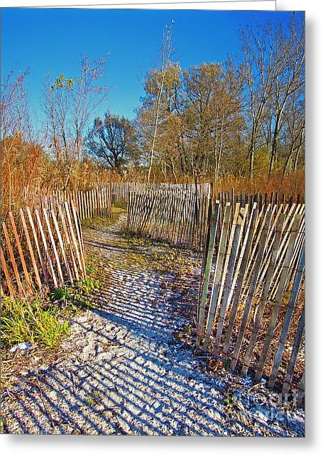 Sand Fences Greeting Cards - Serenity Trail.... Greeting Card by Nina Stavlund