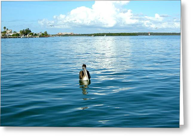 St Petersburg Florida Greeting Cards - Serenity Greeting Card by Victoria Lakes