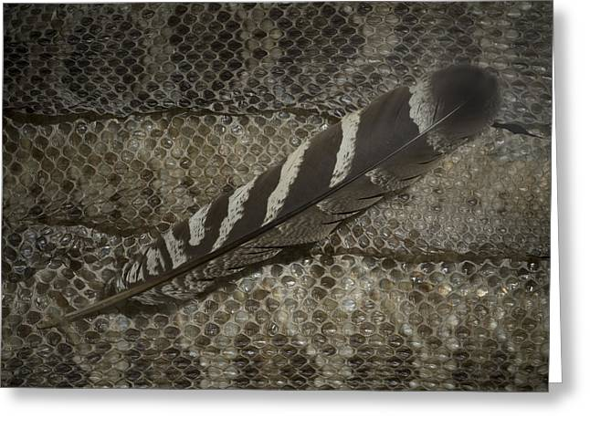 Feather Mixed Media Greeting Cards - Seriema on Snake Greeting Card by Chris Maynard