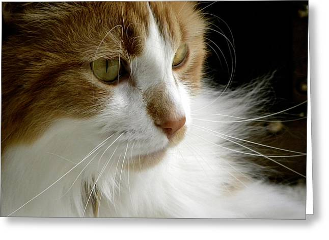 Serious Gato 1 Greeting Card by Julie Palencia