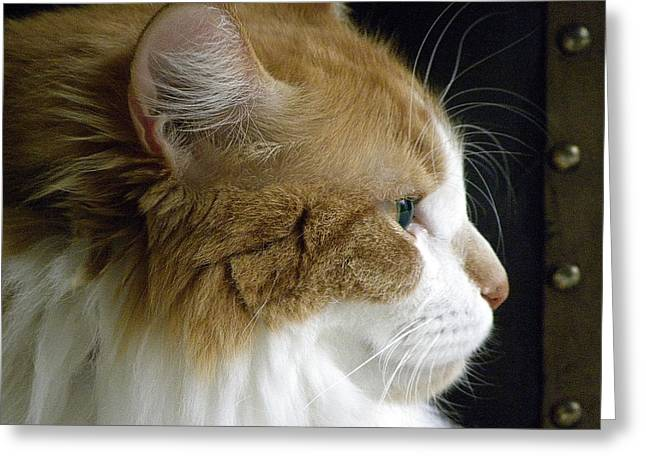 Maine Coon Greeting Cards - Serious Gato 2 Greeting Card by Julie Palencia