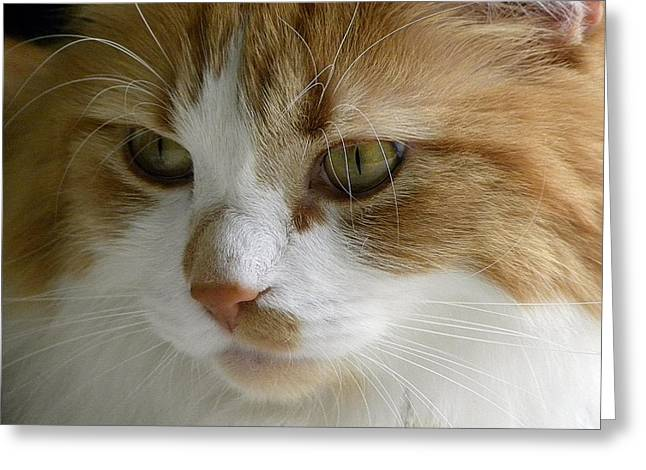 Serious Gato 3 Greeting Card by Julie Palencia