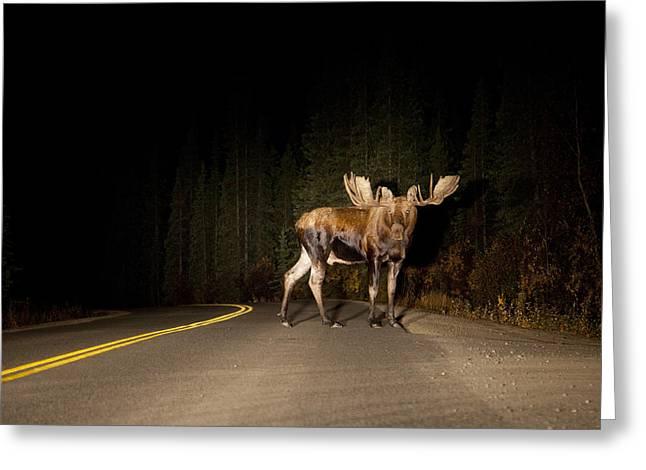 Serious Road Hazard Greeting Card by Tim Grams