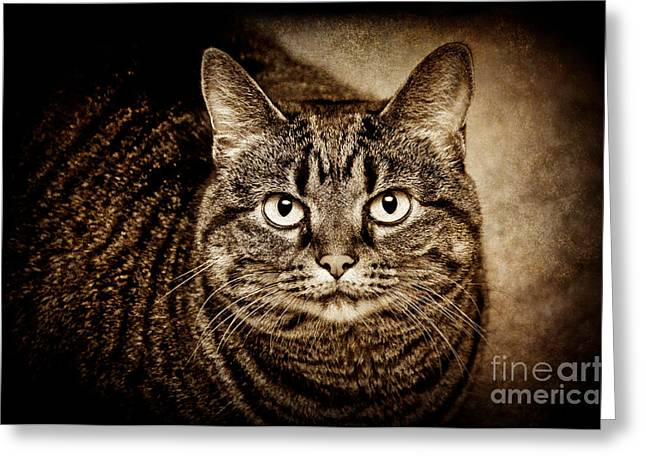 Cute Kitten Mixed Media Greeting Cards - Serious Tabby Cat Greeting Card by Andee Design