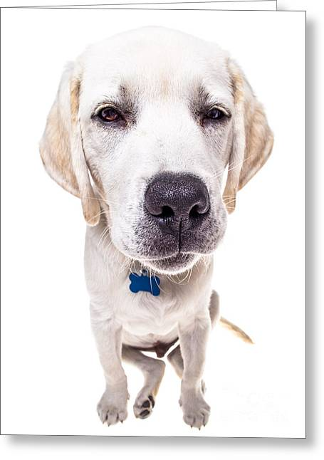 Yellow Dog Greeting Cards - Seriously? Greeting Card by Diane Diederich
