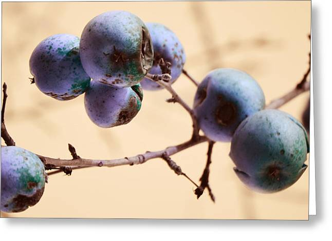 Fruit Tree Photographs Greeting Cards - Serpents Seeds Greeting Card by Jerry Cordeiro
