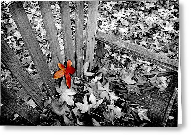 Red Leaves Digital Greeting Cards - Set Apart Greeting Card by Bonnie Bruno