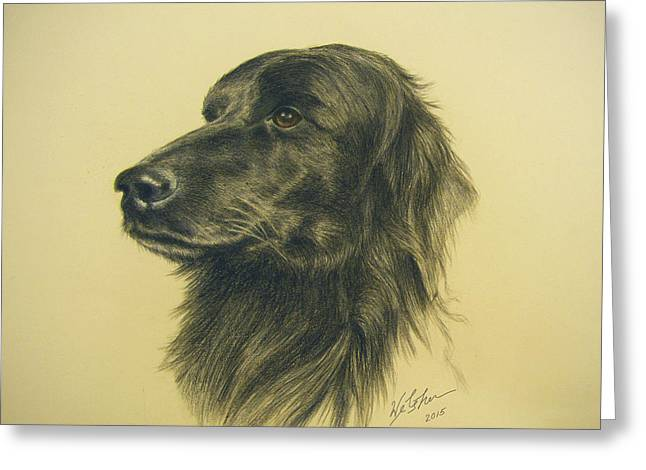 Puppies Drawings Greeting Cards - Setter Lab Mix Greeting Card by Phil Welsher