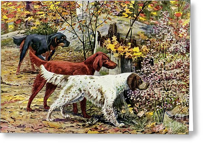 Gordon Setter Art Greeting Cards - Setters Hunting in Woods Greeting Card by Nikki Vig