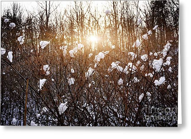 Wintry Greeting Cards - Setting sun in winter forest Greeting Card by Elena Elisseeva