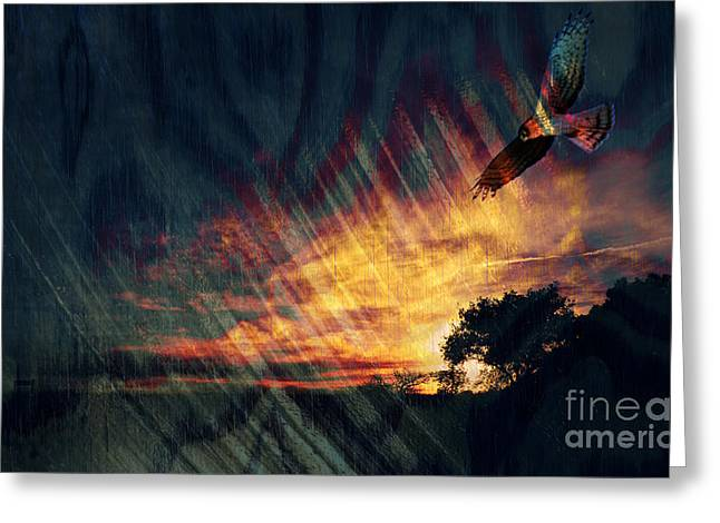 Red Tail Hawk Digital Art Greeting Cards - Setting Sun Greeting Card by Robert Ball