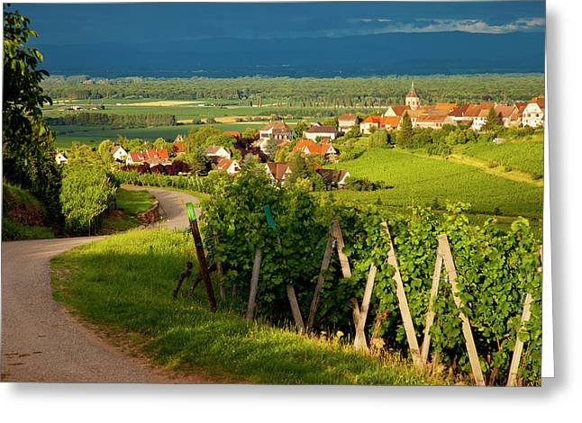 Setting Sunlight On The Vineyards Greeting Card by Brian Jannsen