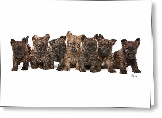 Recently Sold -  - Litter Mates Greeting Cards - Seven Up Greeting Card by Heidi Marcinik