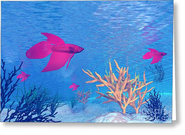Siamese Fighting Fish Greeting Cards - Several Red Betta Fish Swimming Greeting Card by Elena Duvernay