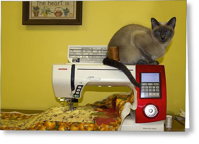 Tonkinese Greeting Cards - Sewing Supervisor Greeting Card by Sally Weigand