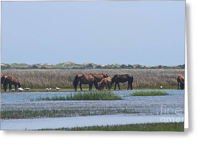 Scavenge Greeting Cards - Shackleford Horses and Friends 4 Greeting Card by Cathy Lindsey