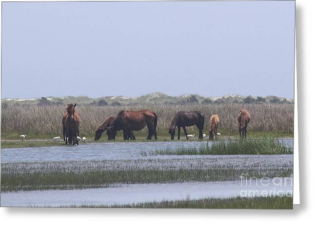 Scavenge Greeting Cards - Shackleford Horses and Friends 6 Greeting Card by Cathy Lindsey