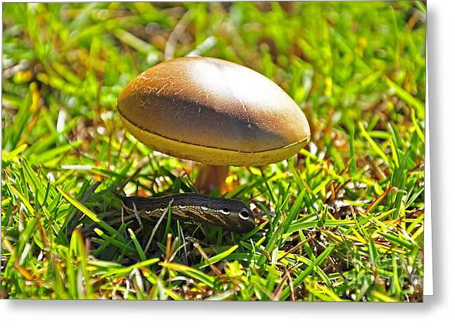 Al Powell Photog Greeting Cards - Shade of the Shroom Greeting Card by Al Powell Photography USA