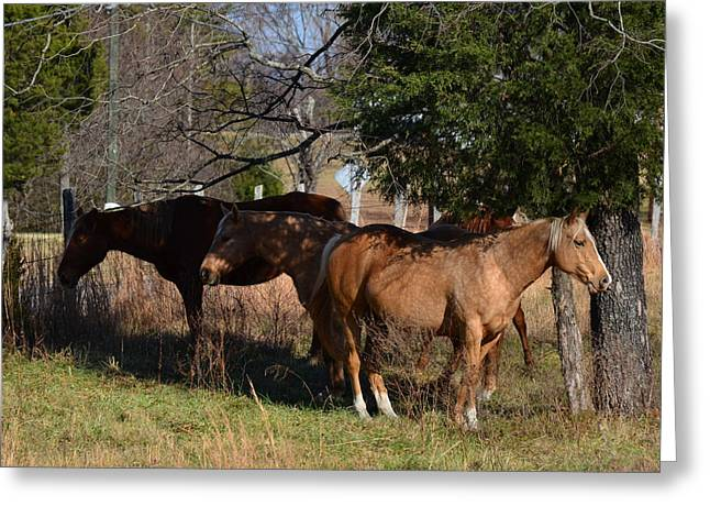 Old 421 Greeting Cards - Shade Tree Horses - 51008441b  Greeting Card by Paul Lyndon Phillips