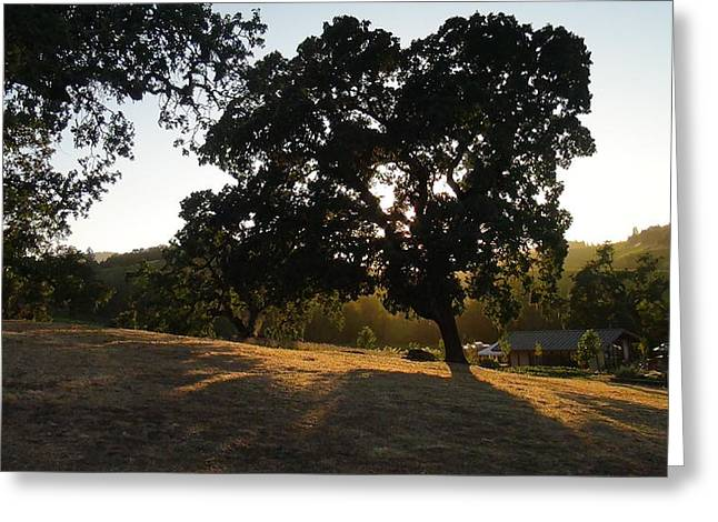 Bam Greeting Cards - Shade Tree  Greeting Card by Shawn Marlow
