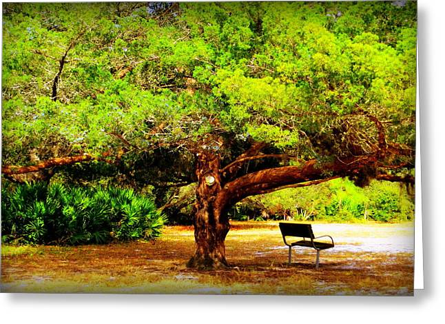Cedar Key Greeting Cards - Shade Tree With Bench Greeting Card by Dorothy Menera
