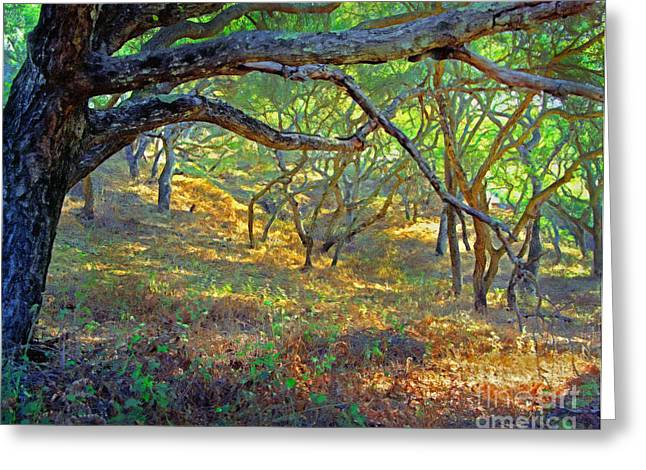 In Shade Greeting Cards - Shaded Oaks Greeting Card by Frank Bez