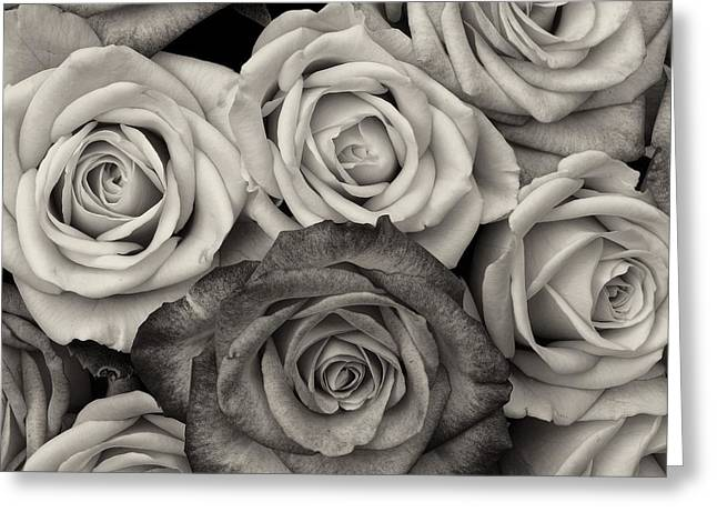 Rose Petals Pyrography Greeting Cards - Shaded roses Greeting Card by FL collection